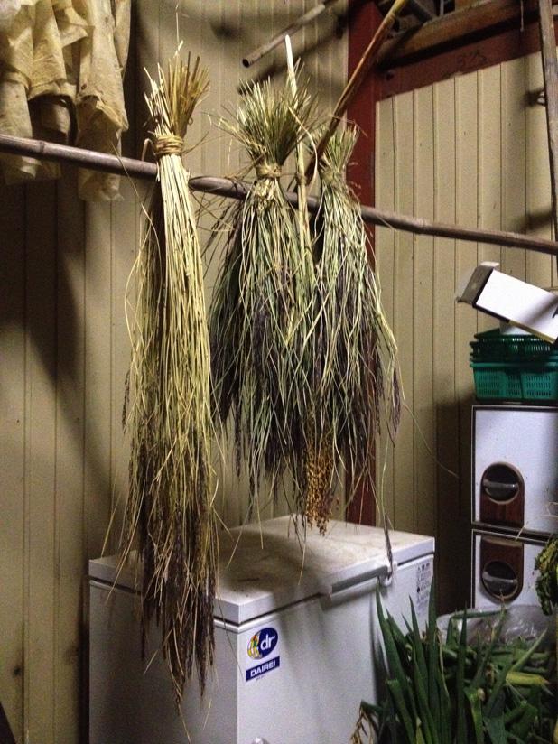 来年用の種籾