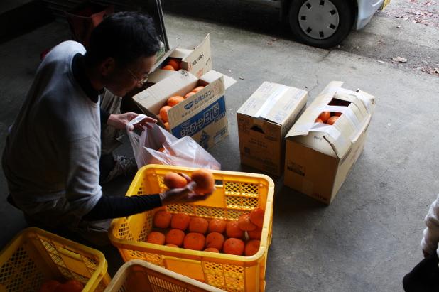 柿農家の長津さん