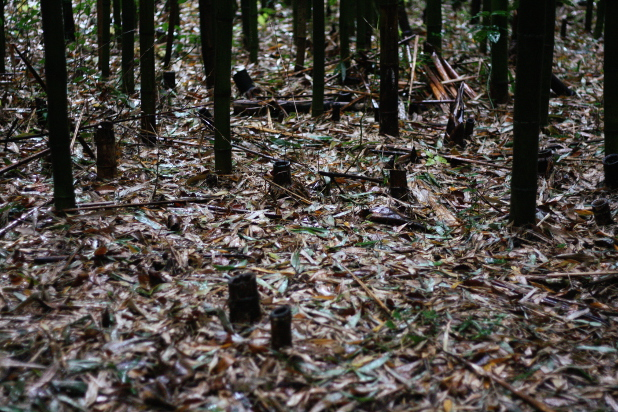 竹林の足もと