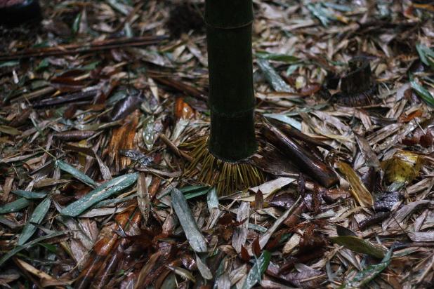 1年></p> <p>伐った竹は枝を落とし、必要な部分だらに2メートルほどの小分けにしていきます。</p> <p><img src=